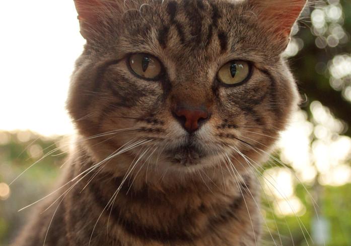 FELV: um dos maiores vilões da medicina de felinos